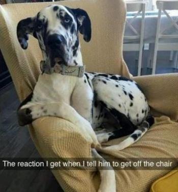dog-chair