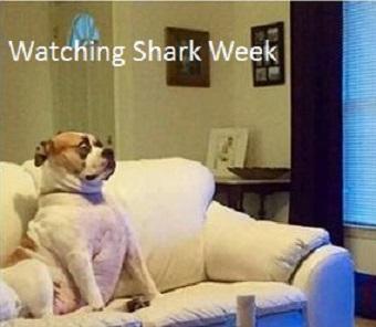 dog-watching-shark-week