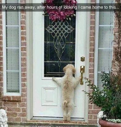 doggy-remorse