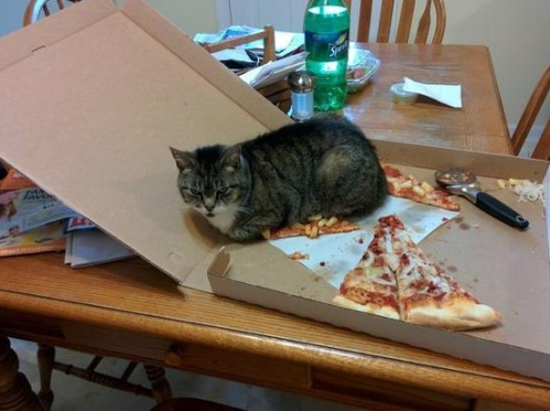 cat-pizza