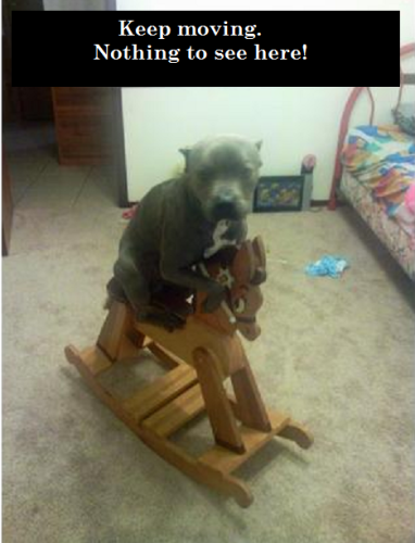 dog-on-rocking-horse
