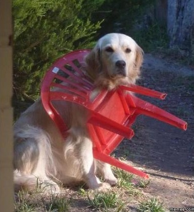 dog-woops-chair