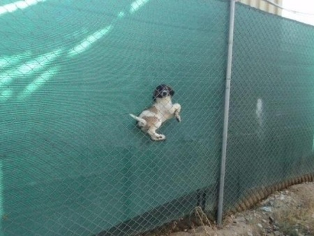 dog-woops-fence