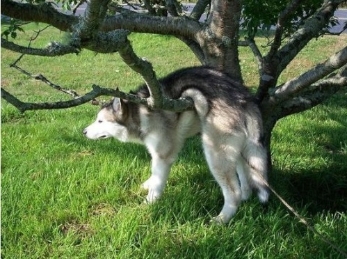 dog-woops-tree