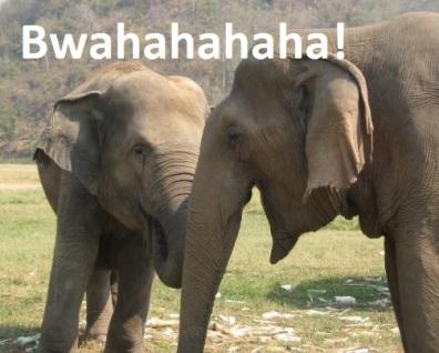 elephants-bwahaha