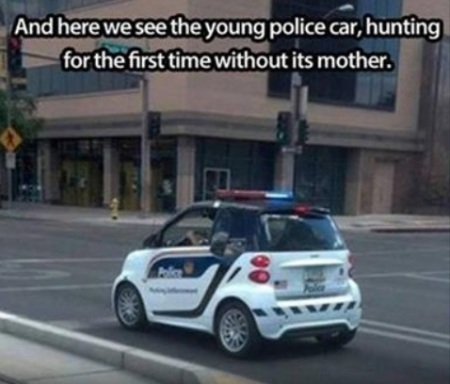 young-police-car