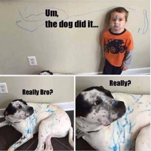 DOG did it
