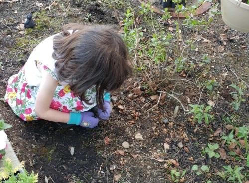 2017_06 02 Bunny helps in garden