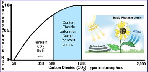 CO2 and photosynthesis