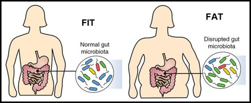 Gut biome and fat