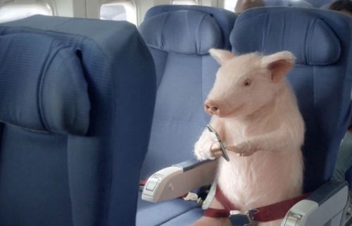 Pig flying coach