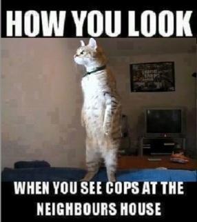 2018_07 11 CAT How you look
