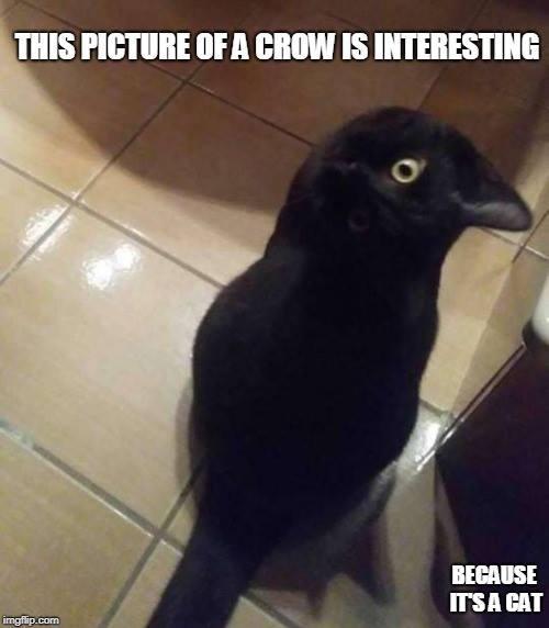 2018_10 029 Crow Cat