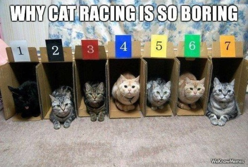 2018_10 18 CAT Cat racing is boring