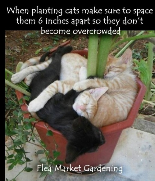 2018_10 20 CATS planting advice