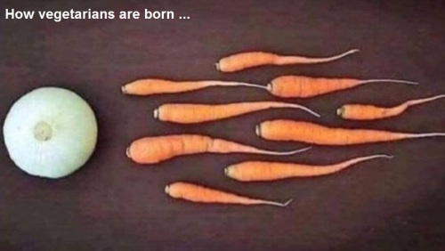 2018_10 24 How veg is born