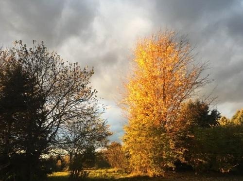 2018_11 03 Tree by Randall