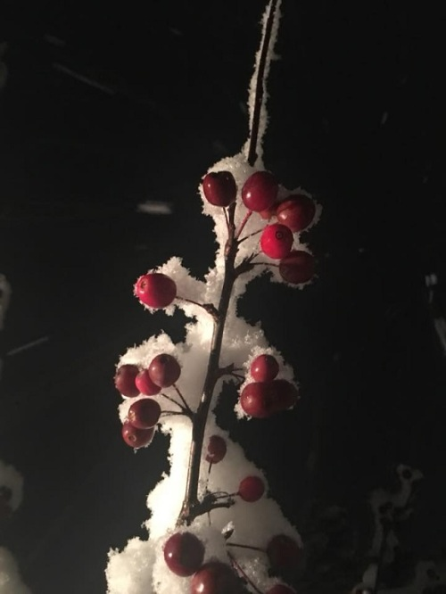2018_11 16 Snow by Deb Hill