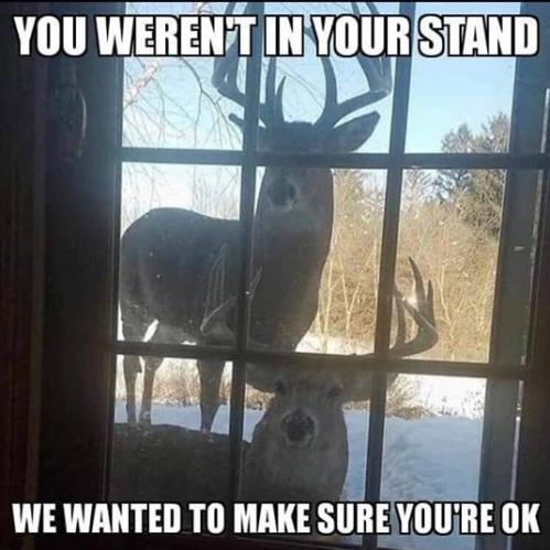 2018_11 18 Deer
