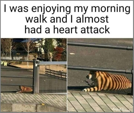 2019_01 18 tiger dog lol