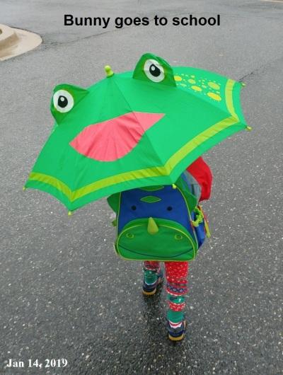 2019_01 24 umbrella