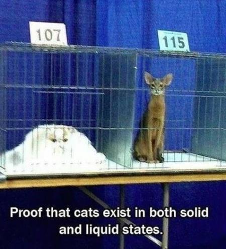 CATS solid liquid