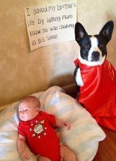 DOG saved baby