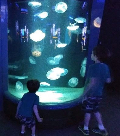 2019_04 22 Jellyfish Bootz Buzz