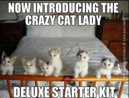 CAT cat lady starter kit