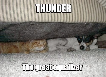 CAT DOG thunder