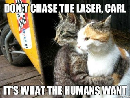 CAT don't chase the laser