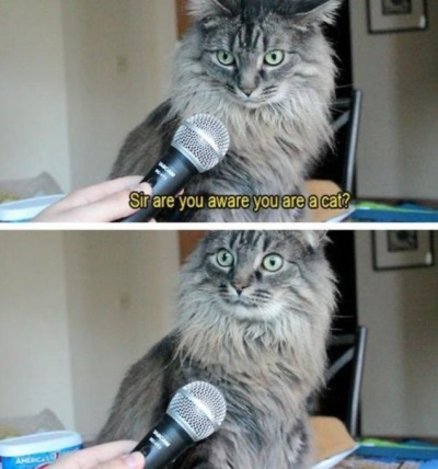 CAT reporter - sent to KK