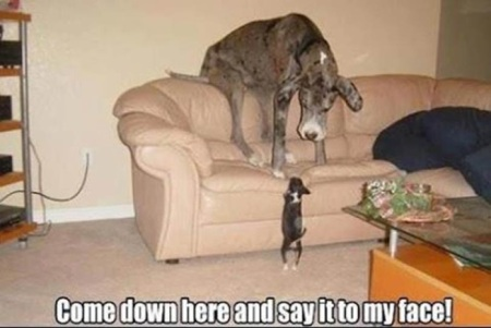 DOG Come down here