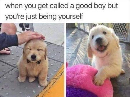DOG good boy
