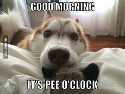 DOG it's pee o'clock
