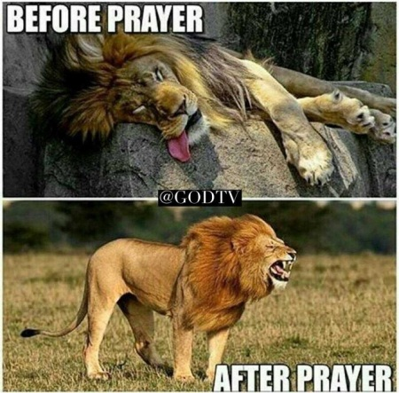Prayer before after lion