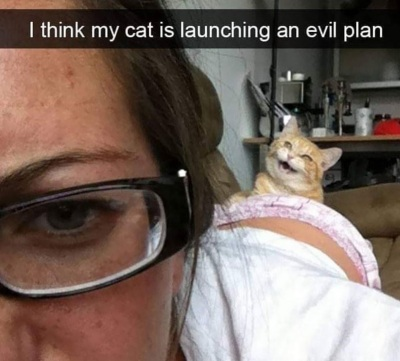 CAT launching evil plan