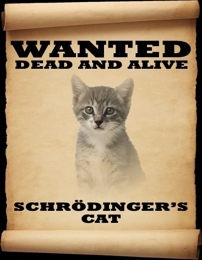 CAT Schrodinger's wanted