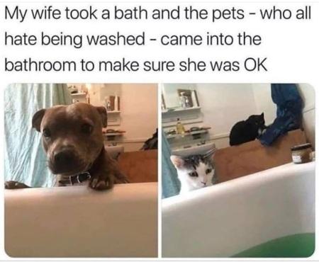 DOG CAT baths