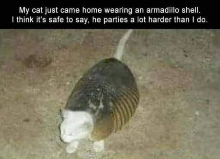 CAT armadillo party