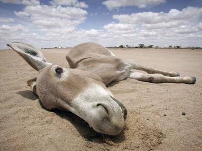 dead donkey