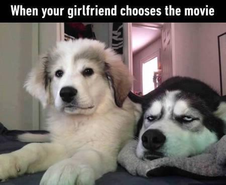 DOG chick flick PN