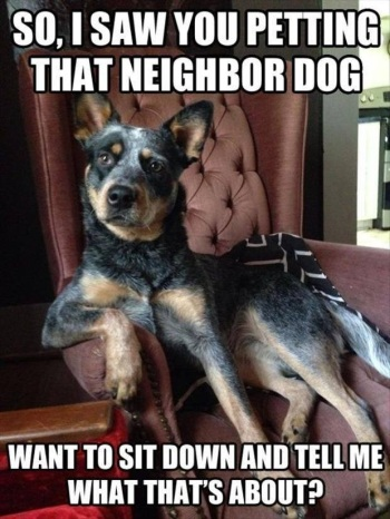 DOG Petting neighbor dog