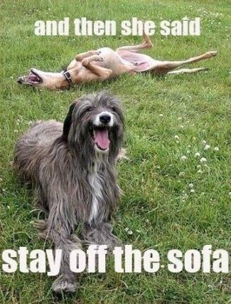 DOG Stay off sofa