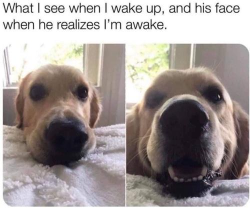 DOG wake up