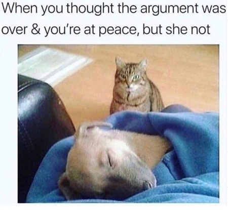 CAT Dog argument