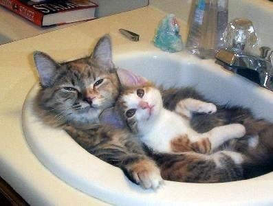 CAT spa day
