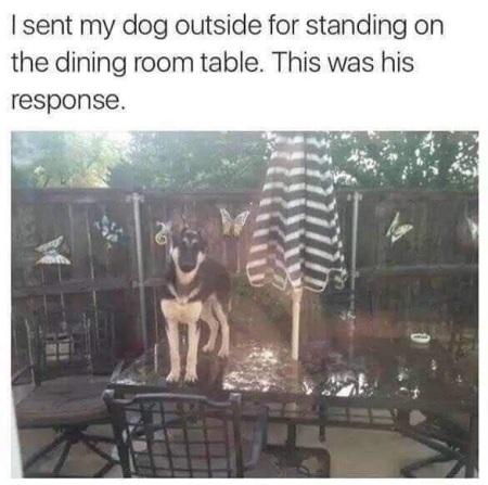 DOG snark