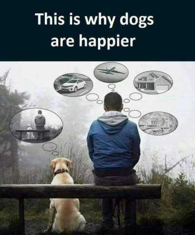 DOG Why dogs are happier