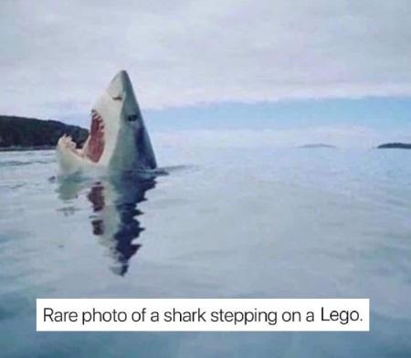 2019_09 09 SHARK Lego